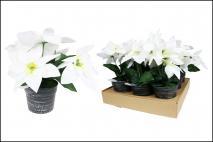 Kwiat sztuczny w doniczce poisencja 24cm, biały