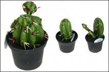 Kaktus w doniczce 13x15cm, mix